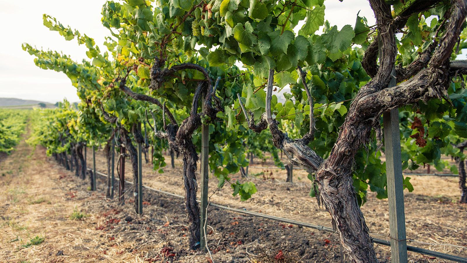 Bilde fra vingården Tyler Winery i California