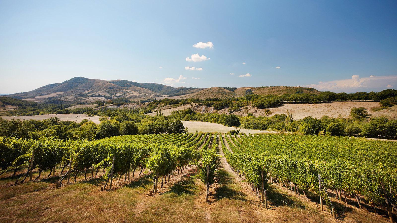 Bilde fra vingården Louis Latour